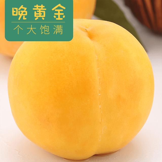 正宗淄博晚黄金水蜜甜桃10斤装应季现摘时令脆桃核小肉厚多汁水润 生鲜水果