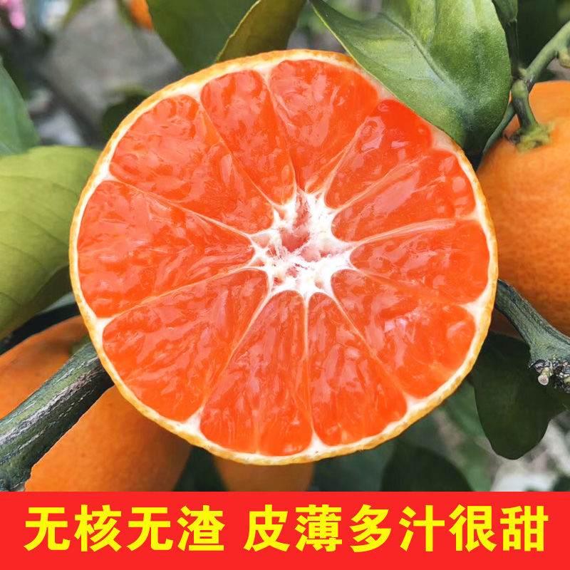 正宗涌泉橘子涌泉蜜桔10斤包邮 农家直销现摘现发不催熟不打蜡 生鲜水果